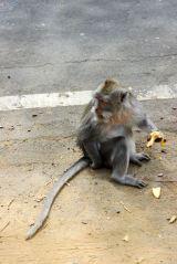 Monkeylove