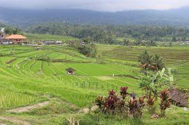 Bali_verkleinert23601