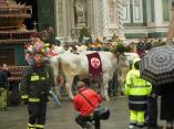 DSCN7518 Florenz